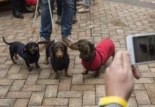 Cachorros 320x220 - Mulher é atacada por 7 cães pequenos e morre nos EUA