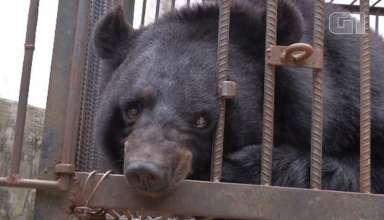 Família chinesa cria filhote de urso
