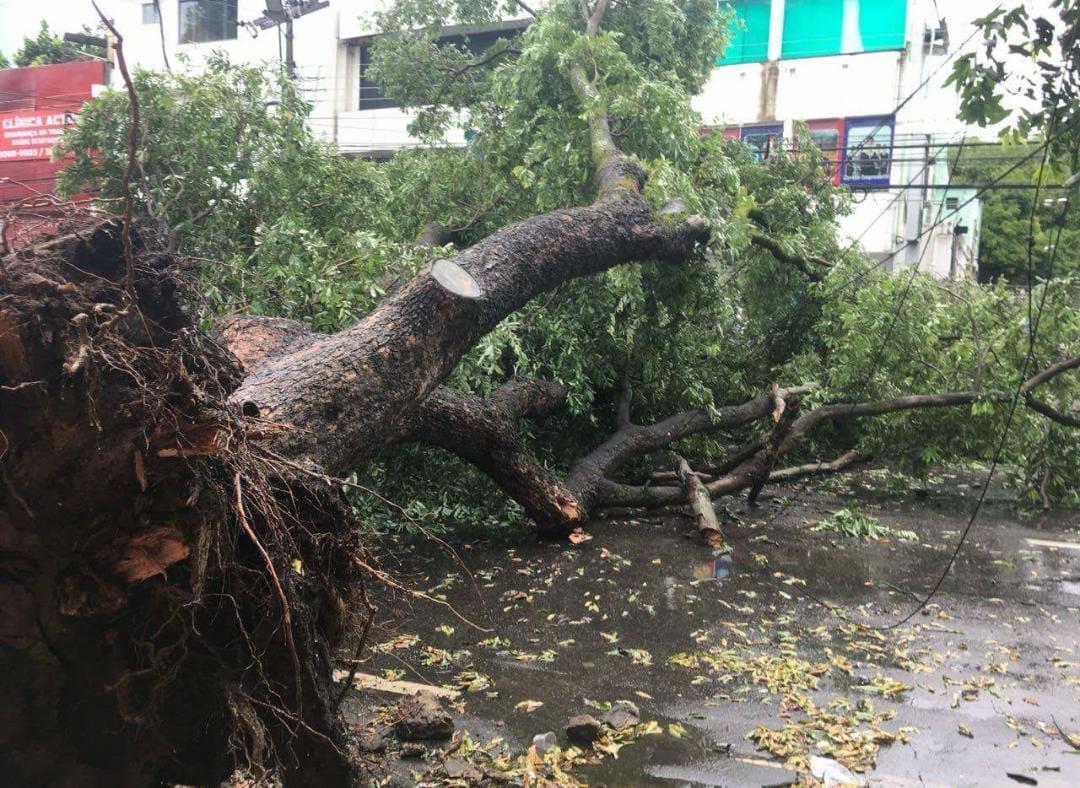 árvore cai no centro
