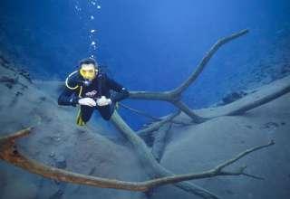 Mergulhador Piccinin