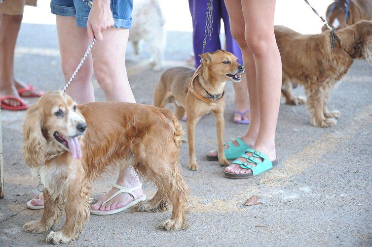 Humanização de animais de estimação
